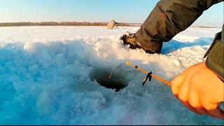 Клюет ли рыба в морозы