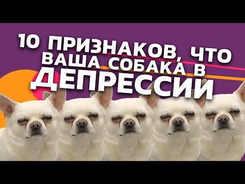 10 признаков, что Ваша собака в депрессии!  - 33pixels