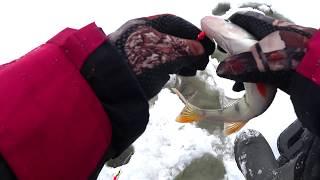 Нормунд грабовскис ловля окуня на топорик