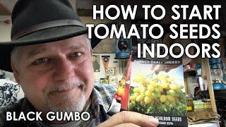 How to Start Tomato Seeds Indoors || Black Gumbo