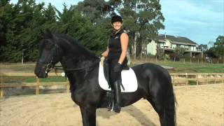 How to stop the young horse bolting (half halts) - YRS TV Episode 51