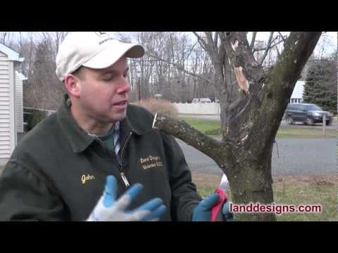 How to Prune (Not Kill) Trees and Shrubs