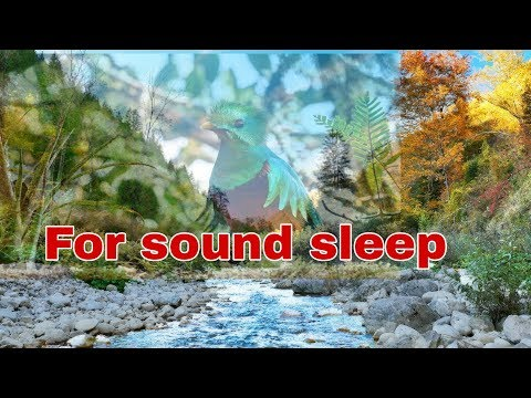 Relaxing nature sounds-Singing Birds Ambience/ Sounds to Sleep/ Звуки природы