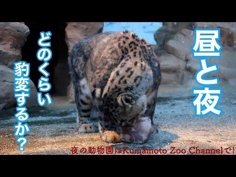 【夜間開園】徹底比較~昼と夜でどのくらい豹変する?!~ 【Night Zoo】