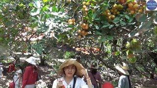 Vietnam Fruit Garden /Thu Vài Trăm Triệu Mỗi Năm Nhờ Mô Hình Vườn Sinh Thái + ăn Nhậu