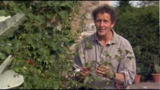 Monty Don Demonstrates How To Do Hardwood Cuttings With Roses In The Autumn...