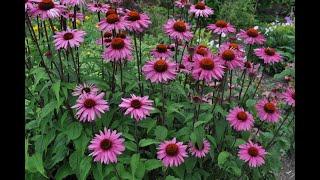 Heat Loving Perennials/Garden Tour/Garden Style Nw
