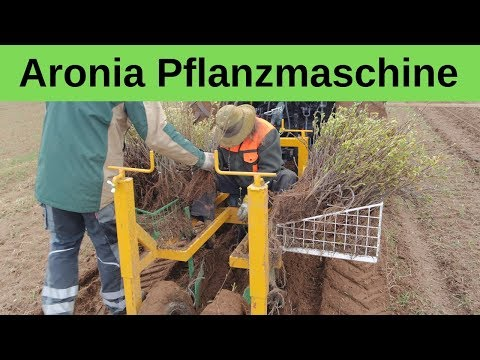Aronia Pflanzmaschine - Verleih und Auftragspflanzungen sowie Verkauf von Aronia Pflanzen