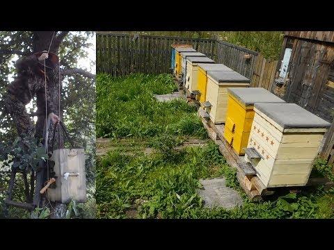 """Пасека с нуля из """"диких"""" пчёл!!!! Все Секреты Пчеловодства!!!!"""