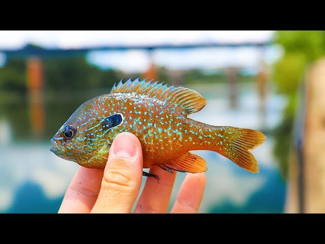 Micro Lure Challenge for Tropical fish!!! (Exotic)
