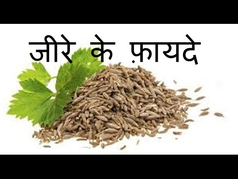 Cumin Seeds in Patna, जीरा बीज, पटना - Latest