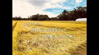 2018年 稲刈り 倒伏田 四隅手刈り無しの稲刈り