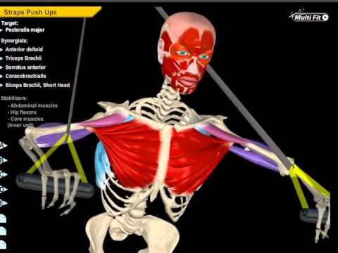 Download Muscle And Motion | All About Strength Training HD Mp4 3GP Video and MP3