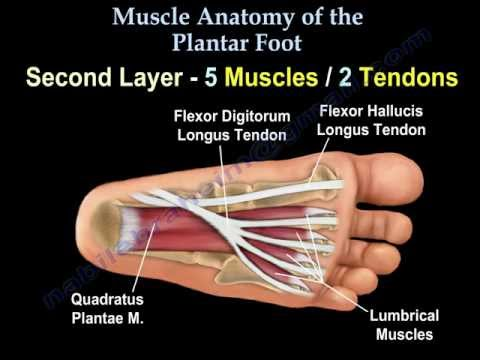 Layers of the Plantar Foot - Foot & Ankle - Orthobullets