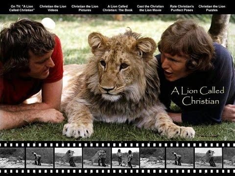 Løven Christian rørte en hel verden
