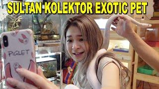 GEREBEK KOLEKSI SANG SULTAN KOLEKTOR EXOTIC PET