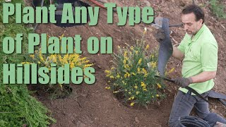 How To Landscape A Steep Slope Without Retaining Walls And Control Hillside Erosion Plant On Slopes