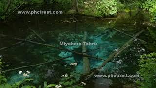 神の子池の動画素材, 4K写真素材