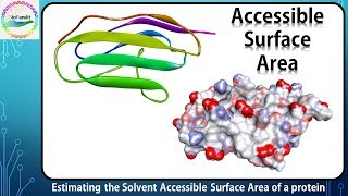Estimating Solvent Accessible Surface Area of a Protein