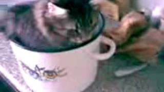 Funny cat Cippa