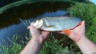 Летняя рыбалка на реке угра