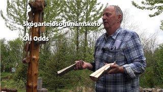 Skógarleiðsögunámskeið í Ólaskógi