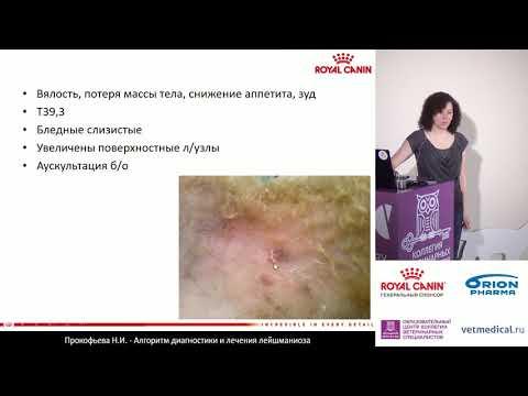 Прокофьева Н. И. - Алгоритм диагностики и лечения лейшманиоза