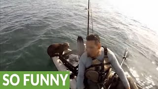 Baby Seal Gets A Free Ride On Kayak