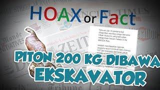 Hoax or Fact: Fakta Ular Piton 200 Kg yang Diangkut Ekskavator