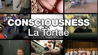 Consciousness - La Tortue