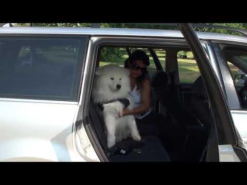 Hunde Sicherheitsgeschirr & Sicherheitsgurt