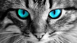 لماذا لا يجب عليك أن تنظر أبدا فى عيون القطط .. ؟؟!!