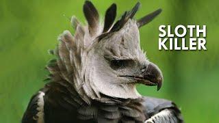 Eagles: Terror of the Skies