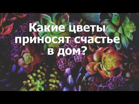 Скачать песню l one музыка счастье любовь