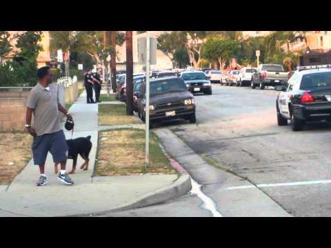 加州南部警察射殺狗隻