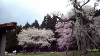 犬と旅行ペットと観光「山形県桜回路」