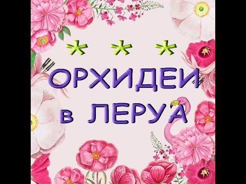 "ЛЕРУА:еще ЗАВОЗ ОРХИДЕЙ,03.09.21,ТЦ ""Космопорт"" (ул.Дыбенко,30),Самара."