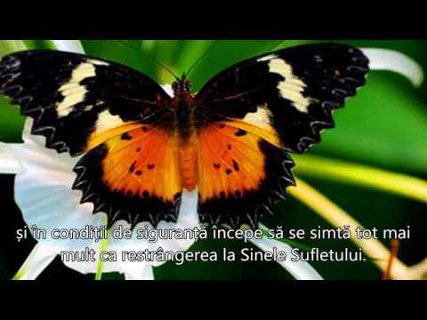 Preparate pentru fluturi parazite, Applications Linguee