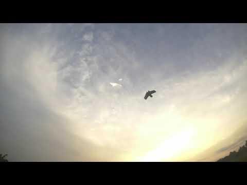 flying-zohd-dart-at-paddy-field