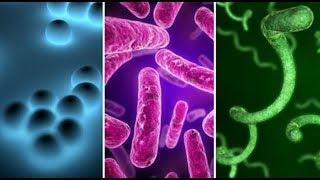 सूजाक (Gonorrhea) रोग के लक्षण अौर वो कया होता है