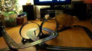 Nigel the orange ginger cat plays with slot cars