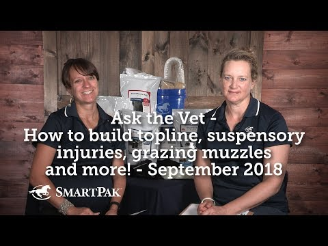 Ask The Vet - How To Build Topline, Suspensory Injuries, Grazing Muzzles And More! - September 2018