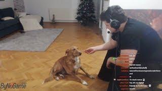 Dünyanın en tatlı ve akıllı köpeği :) | CEKO |