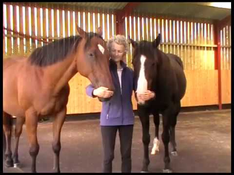 Introduction to Equine Breathing, the natural method that enables owners to help their horses recover from chronic ailments and behavioural problems