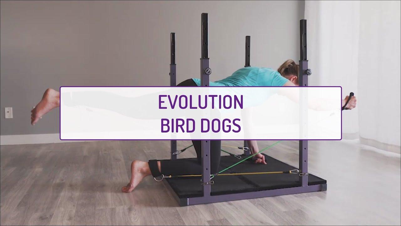 Evolution Bird Dogs