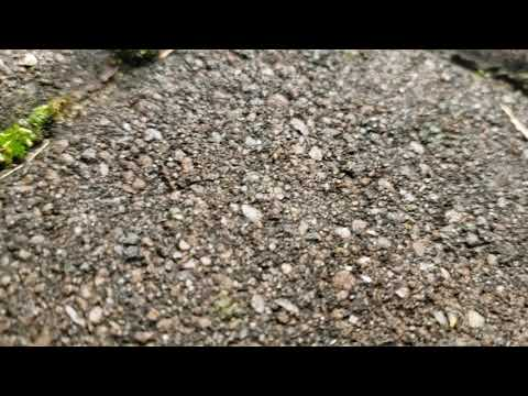 Pavement Ants Relocating in Freehold, NJ