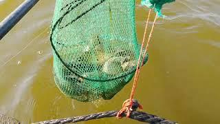 Отчеты о рыбалке в ульяновске улфишинг