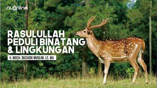 Pesan Rasulullah untuk Peduli Binatang dan Lingkungan