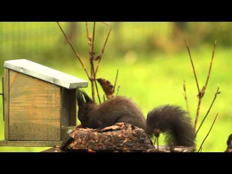 Eichhörnchen am Futterhäuschen ein Kurzfilm von Uwe Fuchs
