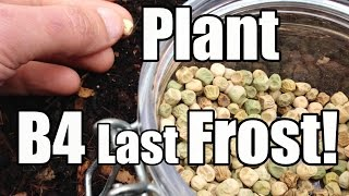 7 Crops to Plant Outside Before the Last Frost (3/6 - Zone 5)